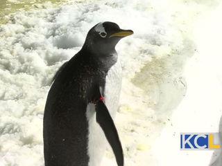 ZOOSDAY: World Penguin Day