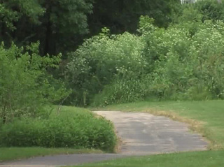 KCMO Parks ordered to create safety plan