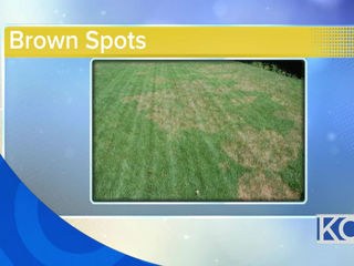 What do brown spots on the lawn mean?