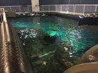 Turtle Fest kicks off at Sea Life Aquarium