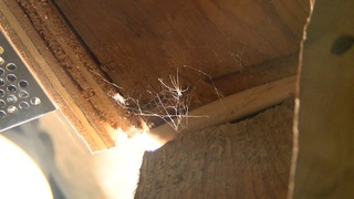 Heat may force more bugs into your home