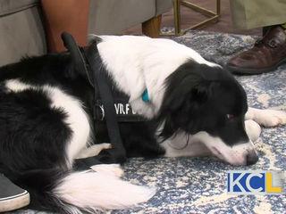 Service Dog Awareness Day
