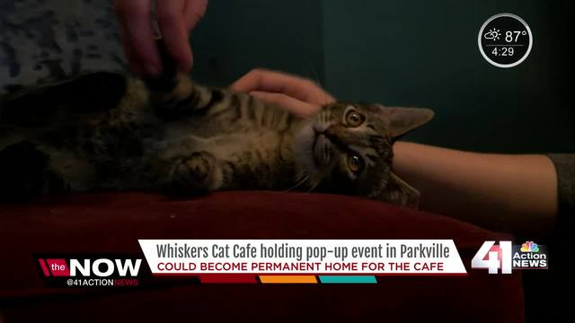 Whiskers Cat Caf- holding pop up event in Parkville