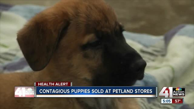 Puppies from Pet Store Affected 39 people with Campylobacter Infection