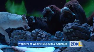Wonders of Wildlife opens