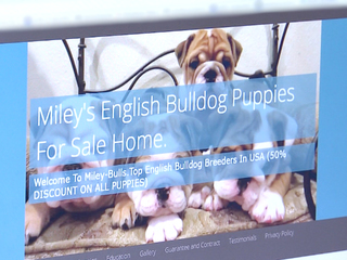 What to look out for when buying a puppy online