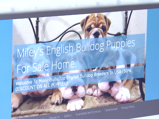 Buying a puppy online? Here's what to look out for