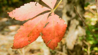 Fall foliage hot spots in KC area