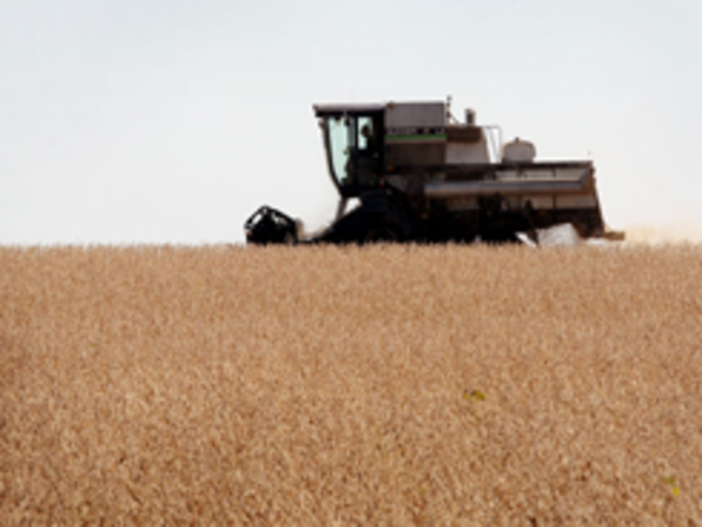 Farmer Harvests his Soybean Crop