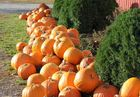 The best pumpkin patches in MO, KS