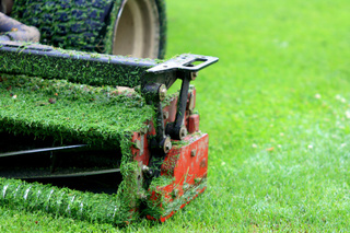 Toby Tobin's 4 tips to tackle your lawn NOW