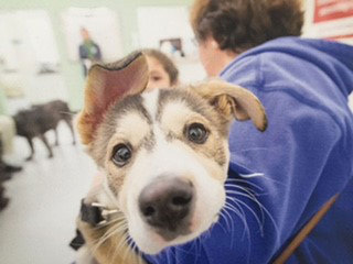 Local group offers free spay and neuter program