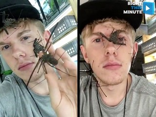 Pet spiders?