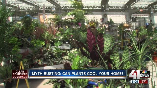 pleasing kc home and garden show. Autoplay  True or false Can a house plant cool down your KSHB com