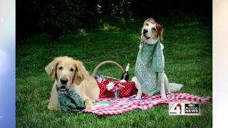 Puppy love benefits KC Pet Project