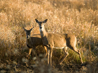 MDC releases numbers for deer, turkey hunting