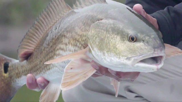 Sport fishing in New Smyrna Beach