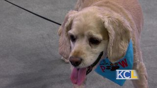 Spoil your pets at the Great KC Pet Expo