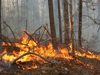 MDC asks for your help to prevent wildfires