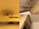 Neighbor's black mold forces family from home