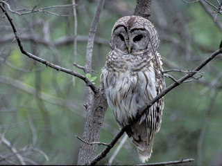 MDC offers night hike at Burr Oak Woods