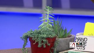 Houseplants 101 for Earth Day