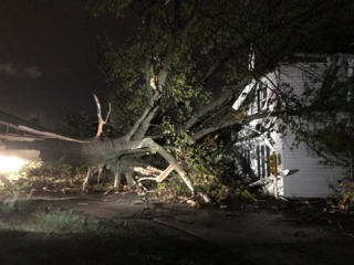 PICS: Overnight storms topple trees, power lines
