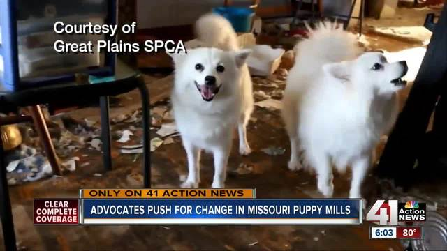 Advocates push for change in Missouri puppy mills
