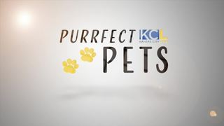 Meet KCL's purrfect pet of the week