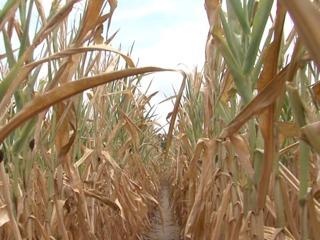 Drought hitting Missouri farmers hard