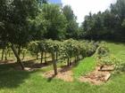 Sour grapes: Sugar Creek battles winery