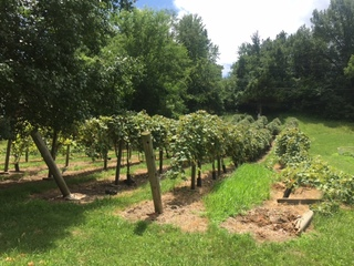 Sour grapes: Sugar Creek battles winery
