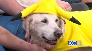 Action-packed fundraiser for seeing eye dogs